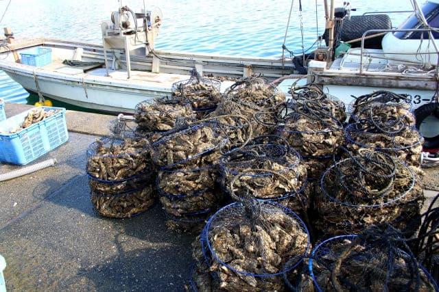 膨大な量の牡蠣